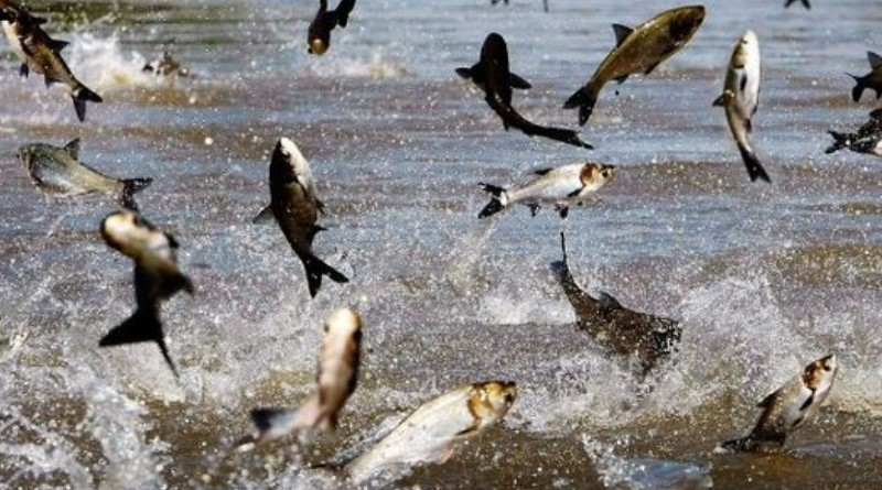 Floating factory would process invasive Asian carp